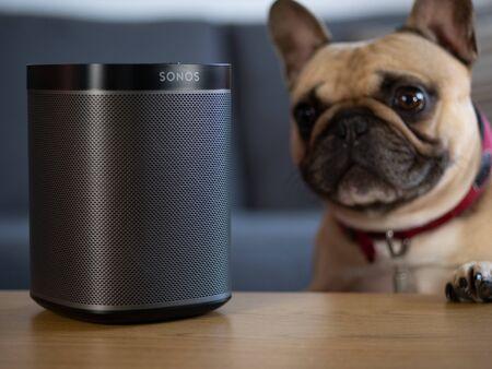 UK, October 2019: Sonos play black wireless speaker with pet dog looking
