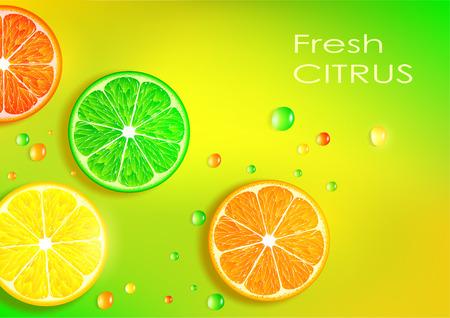citrus fruits: Vector background of citrus fruits