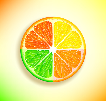 Vector slices of citrus fruits