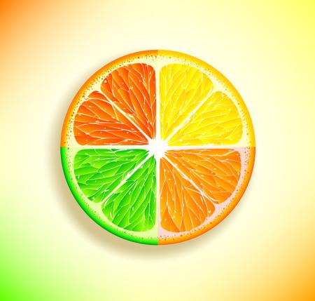 citrus fruits: Vector slices of citrus fruits Illustration