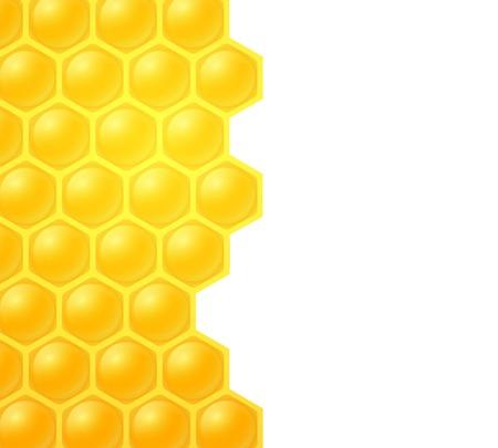 unfinished: abeja de la miel en el fondo blanco
