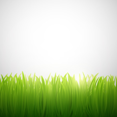natural background of grass on white background
