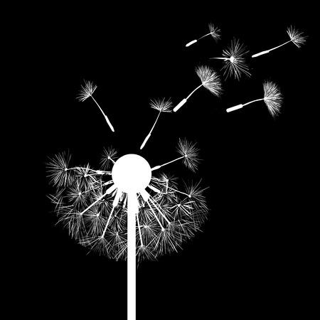 flower of life: Silhouette of dandelion flowers Illustration