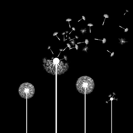 dandelion flower: Silhouette of dandelion flowers Illustration