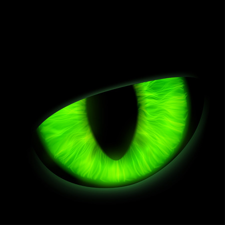 spooky eyes: Eye of a wild animal