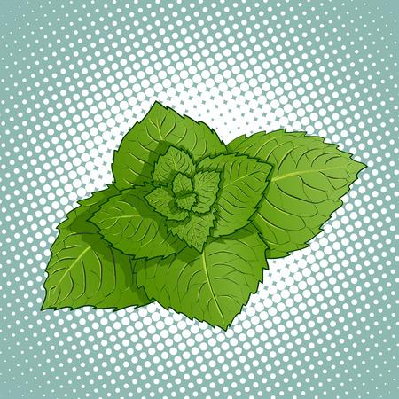mint leaves: Mint leaves.