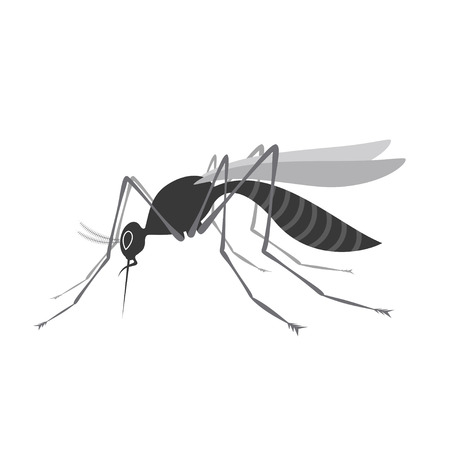 nile: Mosquito with stinger isolated on white background. Zika virus. West Nile fever Illustration