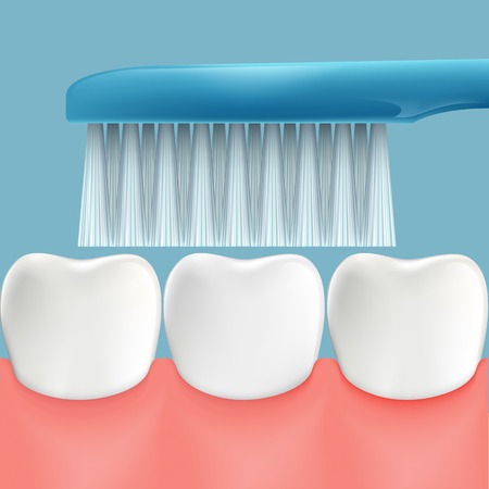 oral hygiene: Human teeth and toothbrush. Oral hygiene. Stock  illustration. Illustration