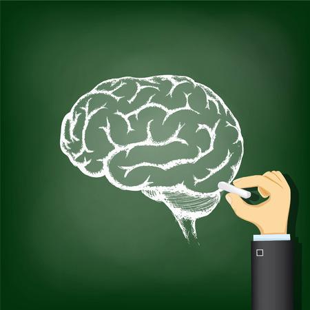 Hand drawing a chalk human brain. Stock vector illustration.