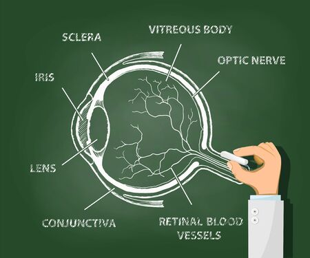 Structure of the human eye. Doctor draws an anatomy of eyeball with chalk on a blackboard. Vector illustration. Vector Illustration