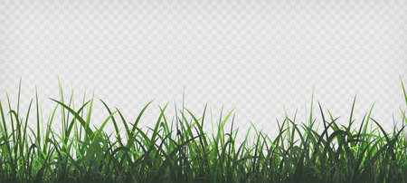 Green grass template. Seamless pattern isolated on a transparent background. Vector illustration.