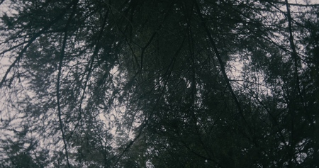 Dark fir branches shot by a rotating camera in the Carpathians 写真素材