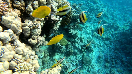 Coral reef with goldfish underwater. 写真素材