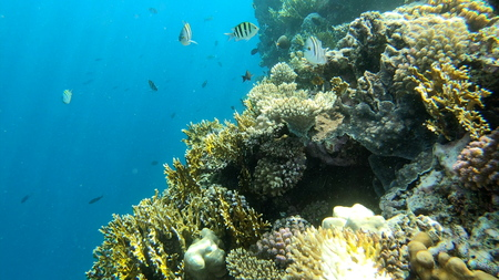 4k - beautiful coral reef in the Red Sea with a lot of amazing fishes.