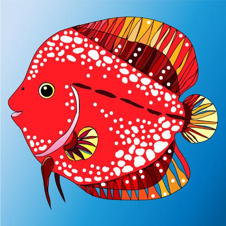 Freshwater fish from Amazon river for aquarium