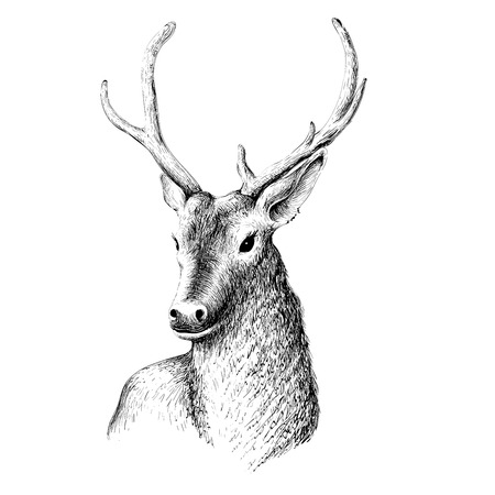 The Vector logo  real  and natural deer  for T-shirt design or outwear.  Hunting style background. Illustration