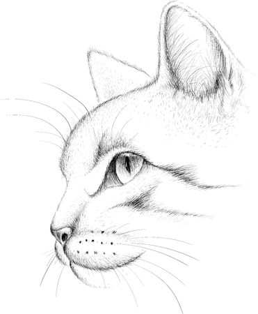The  cat illustration for T-shirt design or outwear. Hunting style cat background.