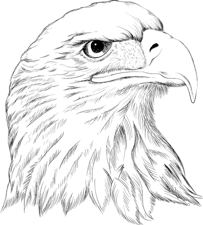 The Vector eagle for T-shirt design or outwear. Hunting style eagle background. Иллюстрация