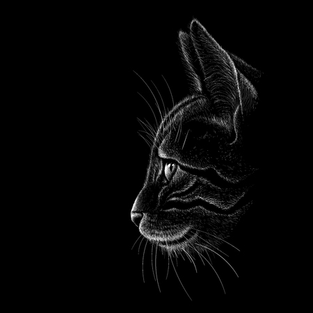 The Vector cat for T-shirt design or outwear. Hunting style cat background.
