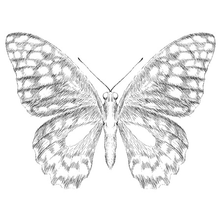 butterfly for tattoo or T-shirt design or outwear.  Cute print style butterfly background.