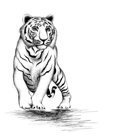 The Vector tiger for tattoo or T-shirt design or outwear. Hunting style tigers print on black background. This drawing is for black fabric or canvas.