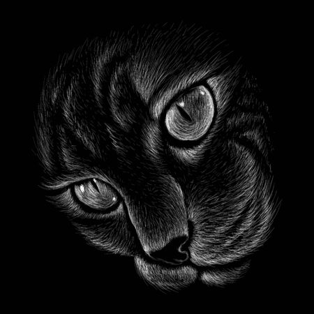 The Vector cat for tattoo or T-shirt design or outwear.  Cute print style cat background. This drawing would be nice to make on the black fabric or canvas Illustration