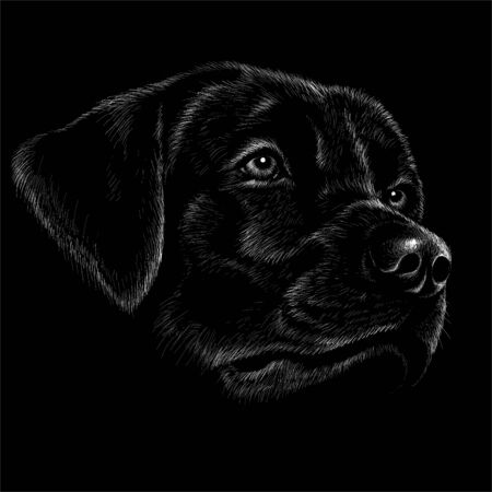 The Vector dog for tattoo or T-shirt design or outwear. Cute print style dog or puppy background.