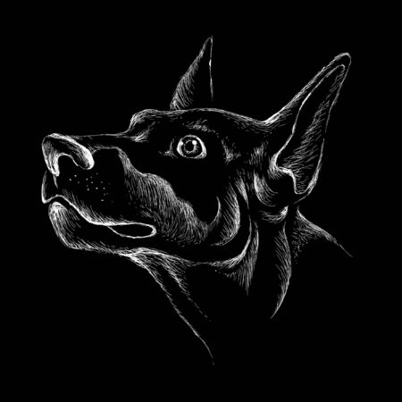 The Vector dog for tattoo or T-shirt design or outwear.