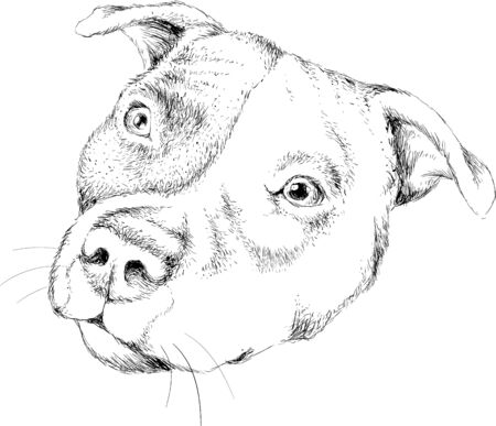 The Vector dog or wolf for tattoo or T-shirt design or outwear. Cute print style dog or wolf background. Illustration