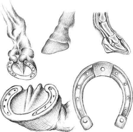 Lo zoccolo di cavallo Vector per il design di t-shirt o capispalla. Fondo di stile del ferro di cavallo del cavallo. Struttura anatomica dello zoccolo per l'atlante di anatomia della medicina veterinaria