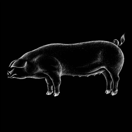 The Vector logo pig for T-shirt design or outwear. Hunting style pig background.