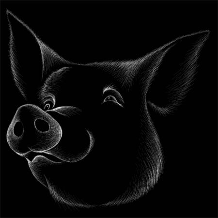 The Vector pig for T-shirt design or outwear. pig background