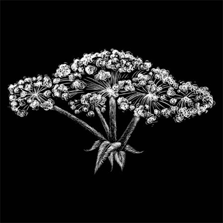 hogweed for tattoo or T-shirt design or outwear.  Cute print style hogweed background. This drawing is for black fabric or canvas Ilustracja