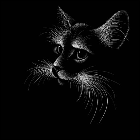 cat for tattoo or T-shirt design or outwear.  Cute print style cat background. This drawing would be nice to make on the black fabric or canvas Illustration