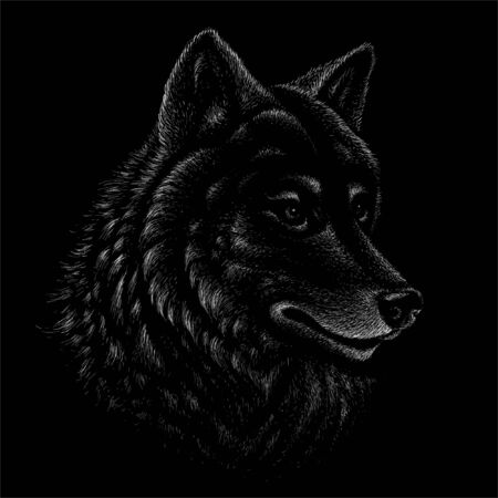 The Vector dog  or wolf for tattoo or T-shirt design or outwear.  Cute print style dog  or wolf  background. This drawing would be nice to make on the black fabric or canvas