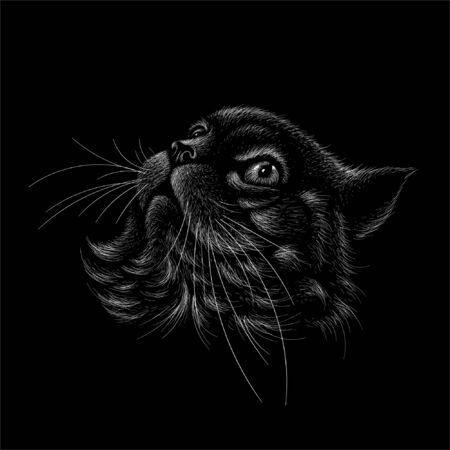 The Vector logo cat for tattoo or T-shirt design or outwear.  Cute print style cat background. This drawing would be nice to make on the black fabric or canvas
