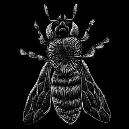 The Vector logo bee for T-shirt design or outwear. This drawing would be nice to make on the black fabric or canvas  イラスト・ベクター素材