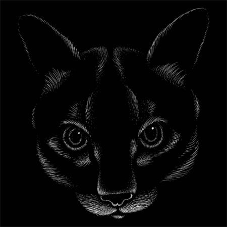 cat for tattoo or T-shirt design or outwear.  Cute print style cat background. This hand drawing would be nice to make on the black fabric or canvas Foto de archivo - 146261343