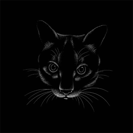 cat for tattoo or T-shirt design or outwear.  Cute print style cat background. This hand drawing would be nice to make on the black fabric or canvas Foto de archivo - 146261340