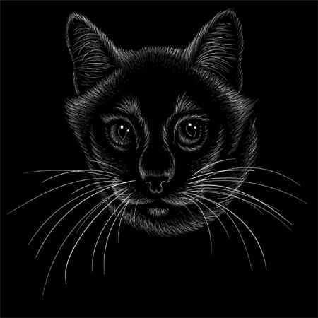 cat for tattoo or T-shirt design or outwear.  Cute print style cat background. This hand drawing would be nice to make on the black fabric or canvas Vectores