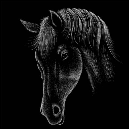 The Vector horse for T-shirt print  design or outwear. Hunting style horse background. This drawing would be nice to make on the black fabric or canvas. Foto de archivo - 147263697