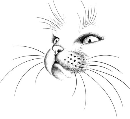 The Vector cat for tattoo or T-shirt design or outwear. Cute print style cat background. This hand drawing would be nice to make on the black fabric or canvas