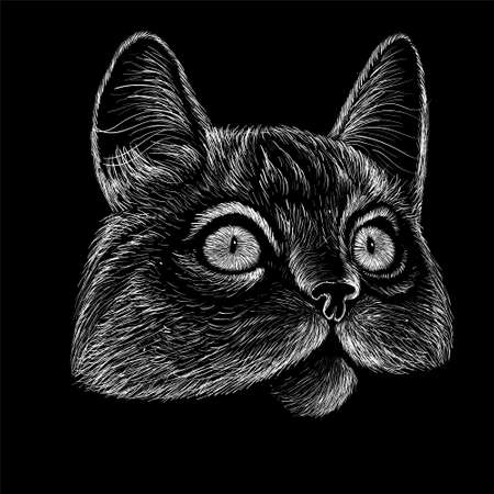 Cat for tattoo or T-shirt design or outwear. Cute print style cat background.