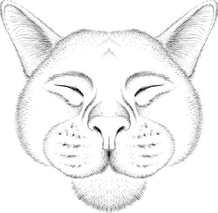Cat vector art illustration T-shirt apparel tattoo design or outwear. Cute print style kitten background. This hand drawing would be nice to make on the black fabric or canvas. Иллюстрация