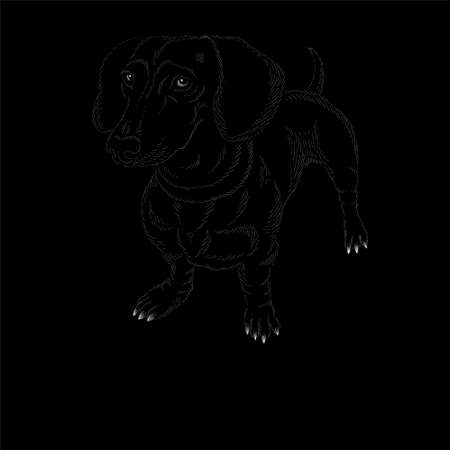 The Vector logo dog rottweiler for tattoo or T-shirt design or outwear. Cute print style dog rottweiler background. This hand drawing would be nice to make on the black fabric or canvas Иллюстрация