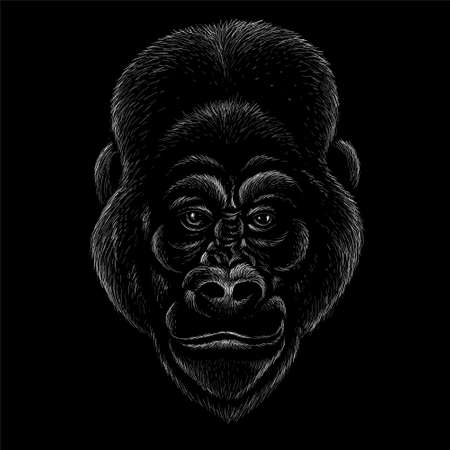 The Vector a monkey or gorilla named King Kong for tattoo or T-shirt design or outwear. Cute print style a monkey or gorilla named King Kong background. This drawing would be nice to make. Иллюстрация