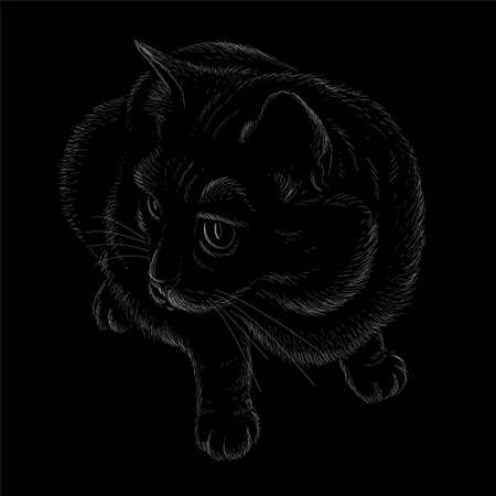 Cat vector art illustration T-shirt apparel tattoo design or outwear. Cute print style kitten background. This hand drawing would be nice to make on the black fabric or canvas Illustration