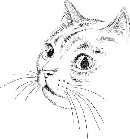 Cat vector art illustration T-shirt apparel tattoo design or outwear. Cute print style kitten background. Иллюстрация