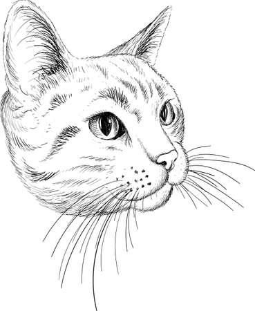 Cat vector art illustration T-shirt apparel tattoo design or outwear. Cute print style kitten background.