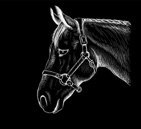 horse for T-shirt print design or outwear. Hunting style horse background.